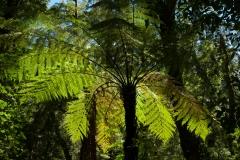 Copyright-Achim-Kaeflein-Neuseeland-2262