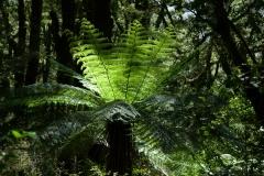 Copyright-Achim-Kaeflein-Neuseeland-2279