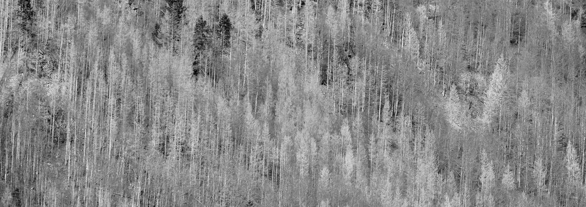 Der Schwarzwald lebt - der Schwarzwald stirbt,Book on demand , Fotografie Achim Käflein, Freiburg