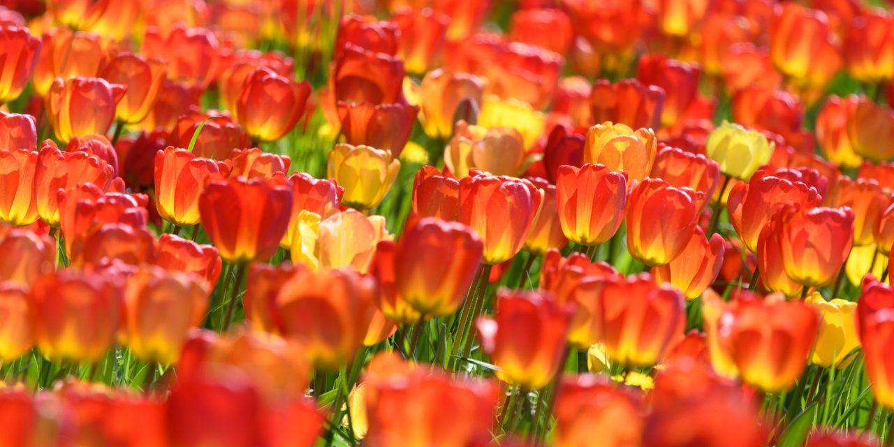 Flower Power XXL