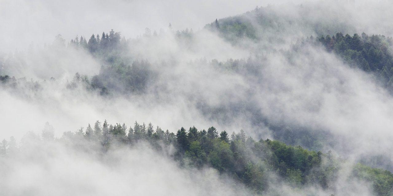 Der Schwarzwald lebt – der Schwarzwald stirbt